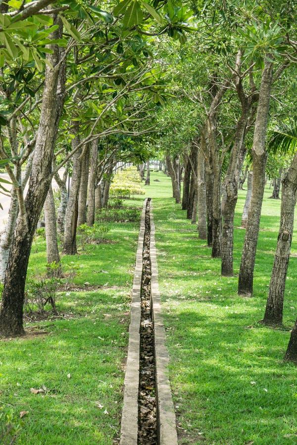 Ogrodowa sposób ścieżka z deszczówka odcieku parkiem publicznie zdjęcie royalty free