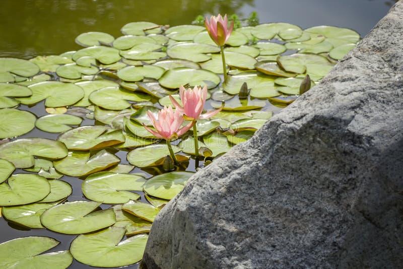ogrodowa woda zdjęcie royalty free