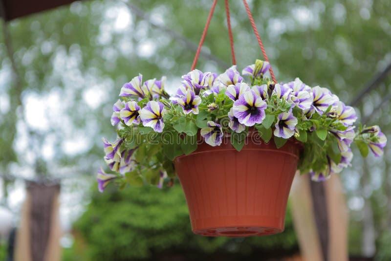 Ogrodowego kwiatu brązu plastikowego garnka drzewny bokeh nikt zdjęcia stock