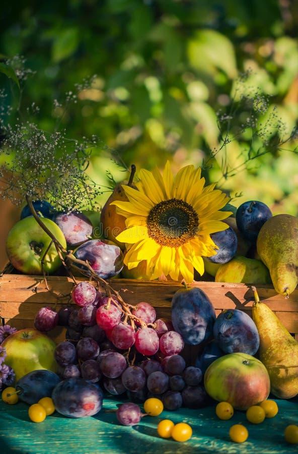 Ogrodowego późnego lata owoc kosza światła położenia sezonowy słońce fotografia royalty free