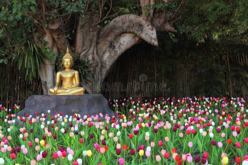 ogrodowi Buddha tulipany obraz royalty free