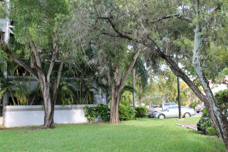 Ogrodowi drzewa i budynek fotografia stock