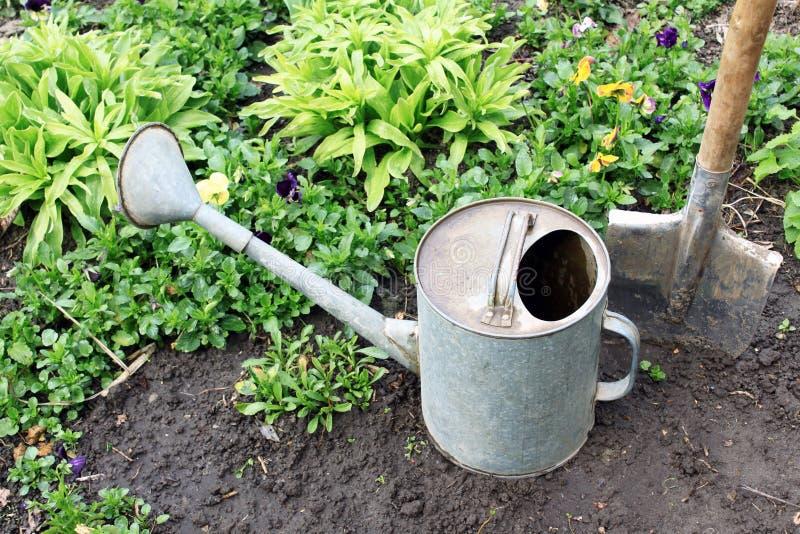 Ogrodowi narzędzia w jarzynowym ogródzie na tle rośliny fotografia royalty free
