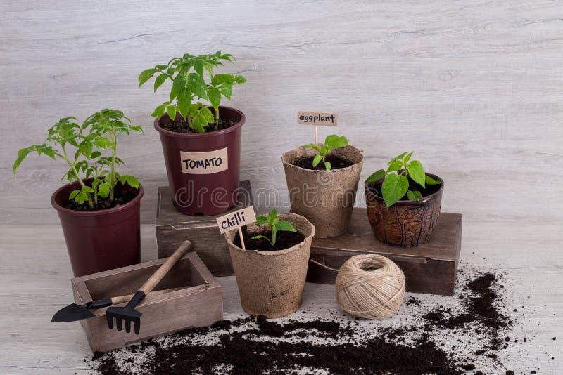 Ogrodowi narzędzia z sadzonkowym warzywem dalej rozjaśniają tło fotografia stock
