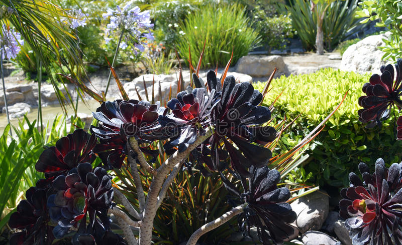 Ogrodowi terenów kwiaty fotografia stock