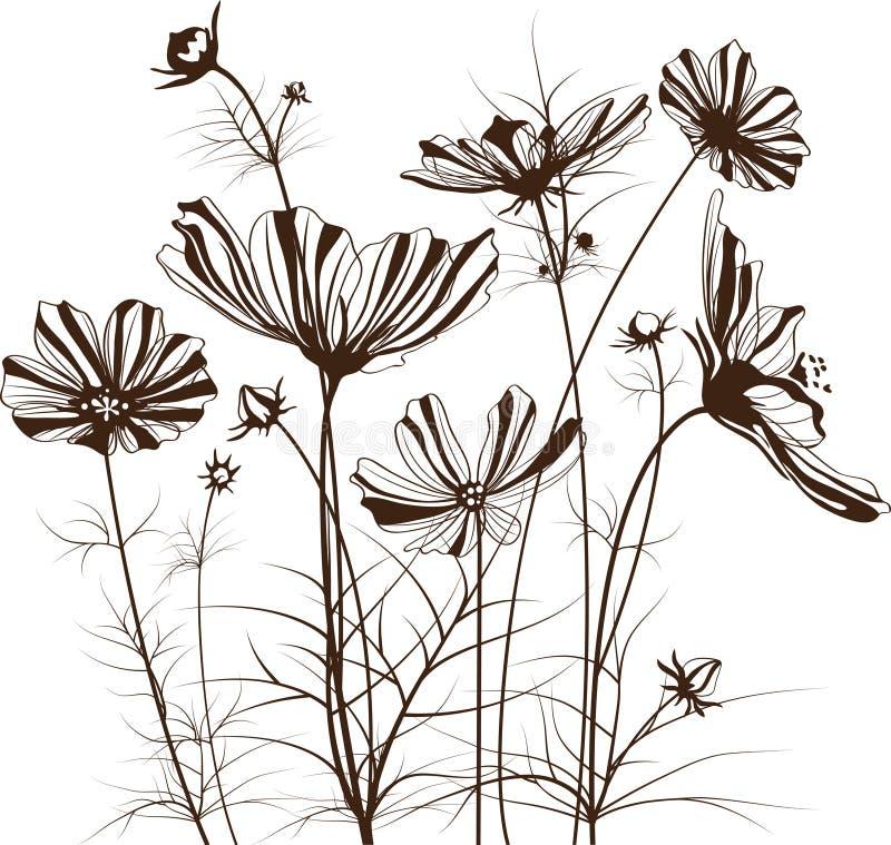 Ogrodowi wektorów kwiaty, Kosmosu bipinnatus ilustracji
