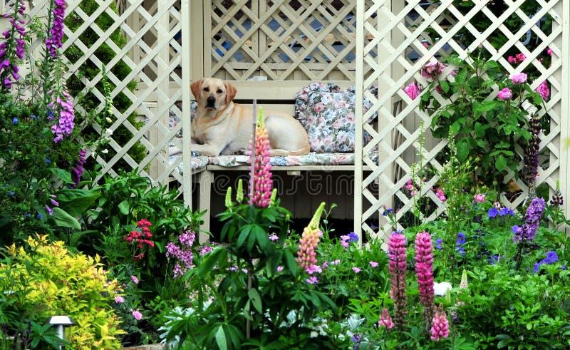 ogrodowy ładny zdjęcia stock