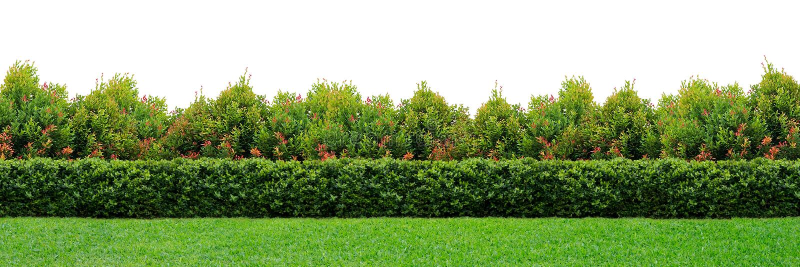 ogrodowy żywopłot obrazy stock