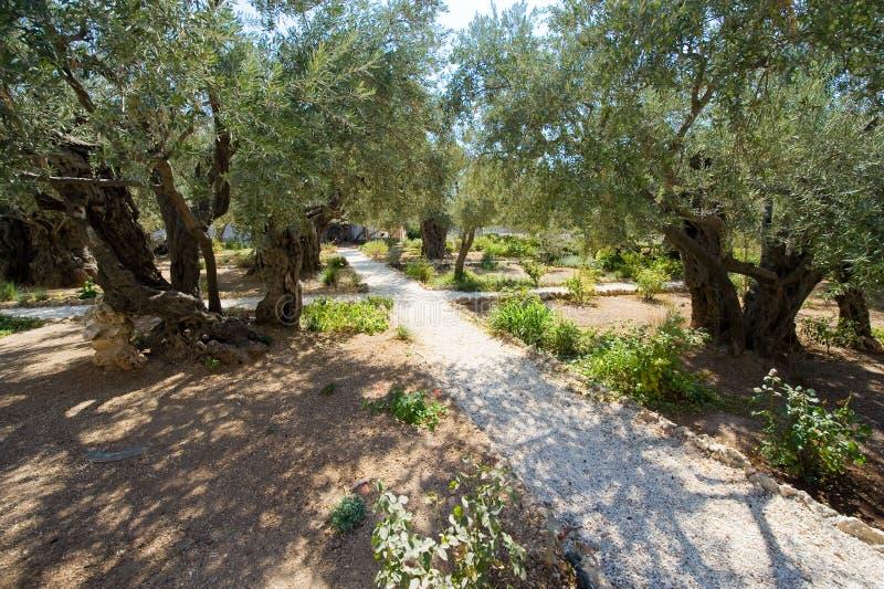 ogrodowy gethsemane fotografia royalty free