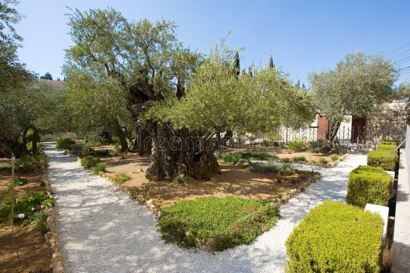 ogrodowy gethsemane zdjęcia royalty free
