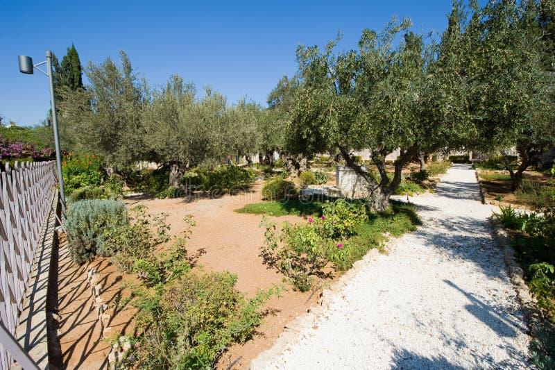 ogrodowy gethsemane obraz stock