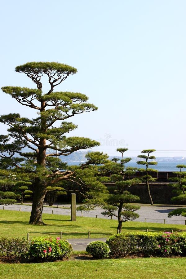 ogrodowy japończyk zdjęcie stock