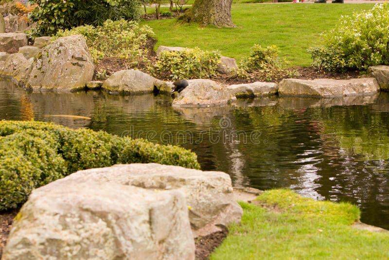 ogrodowy japoński strumień fotografia royalty free