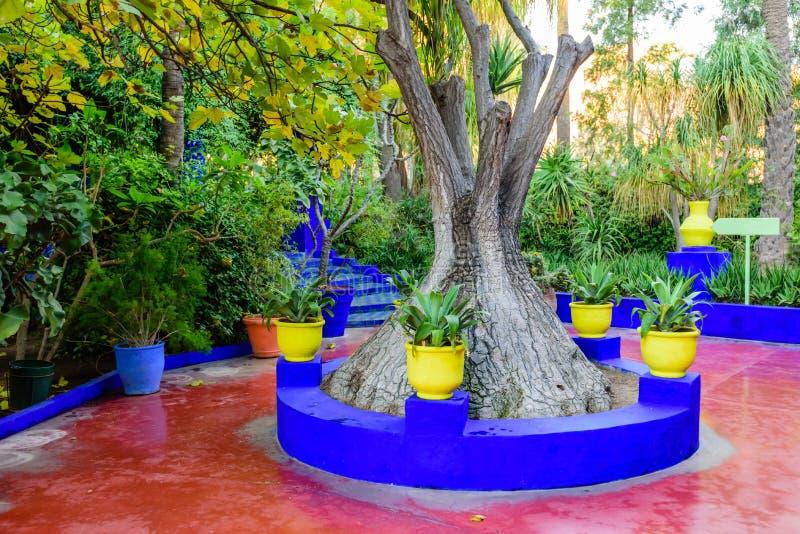ogrodowy majorelle obrazy royalty free
