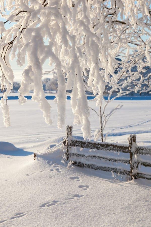 Ogrodowy ogrodzenie zdjęcia royalty free