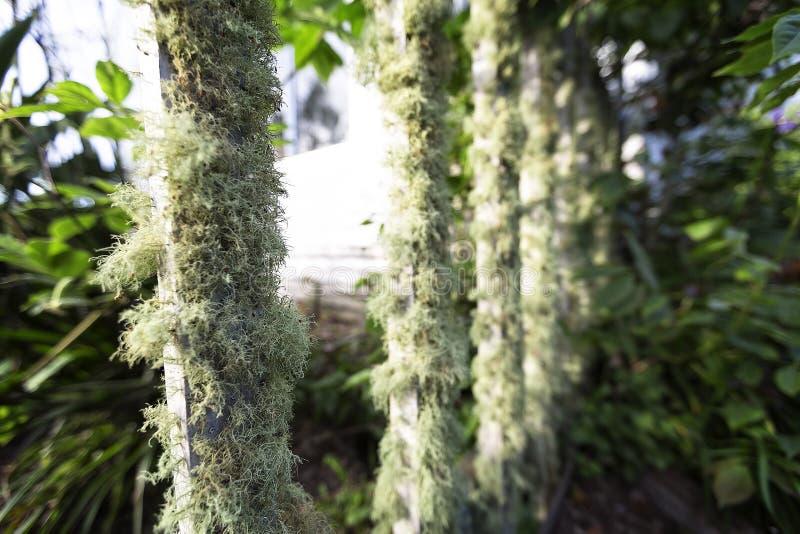 Ogrodowy ogrodzenie zdjęcie stock