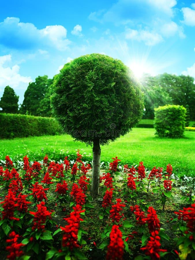 ogrodowy optymistycznie zdjęcie stock