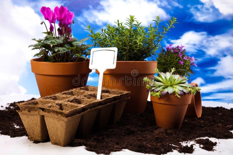 Ogrodowy pojęcie, żywa jaskrawa wiosna zdjęcia royalty free