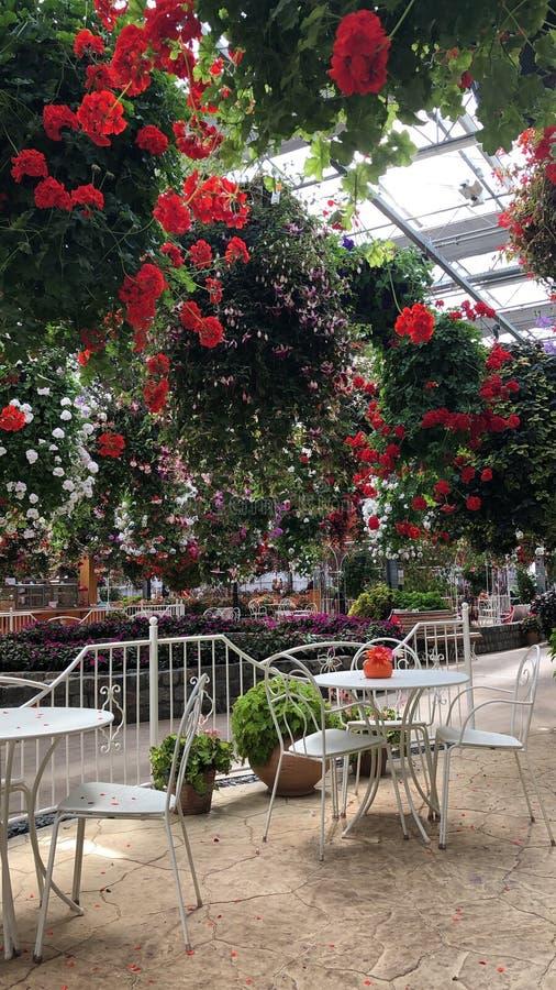 ogrodowy romantyczny zdjęcie stock