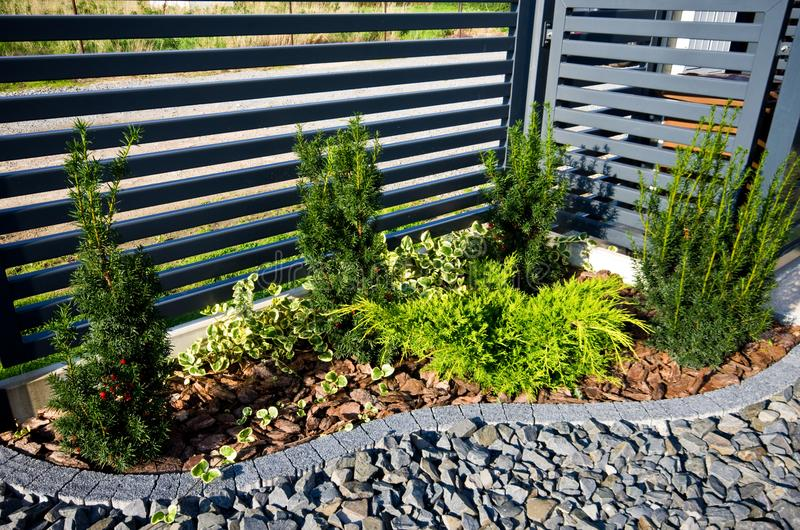 Ogrodowy szczegół: ogrodzenie z cyprysowych drzew kątem obraz royalty free