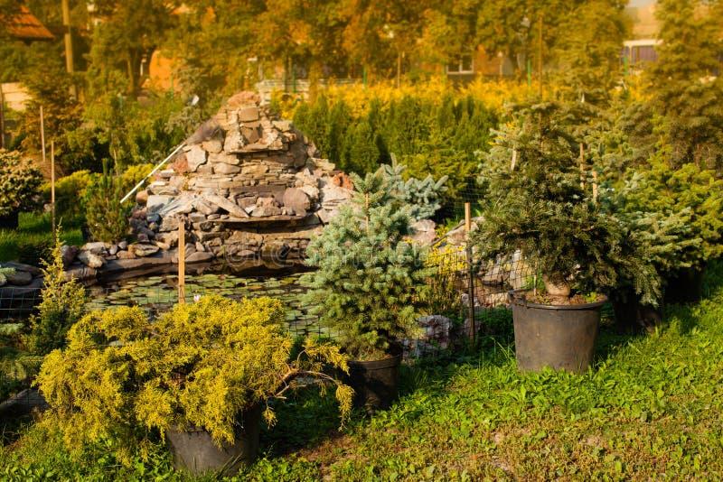 Ogrodowy targowy plenerowy obraz royalty free