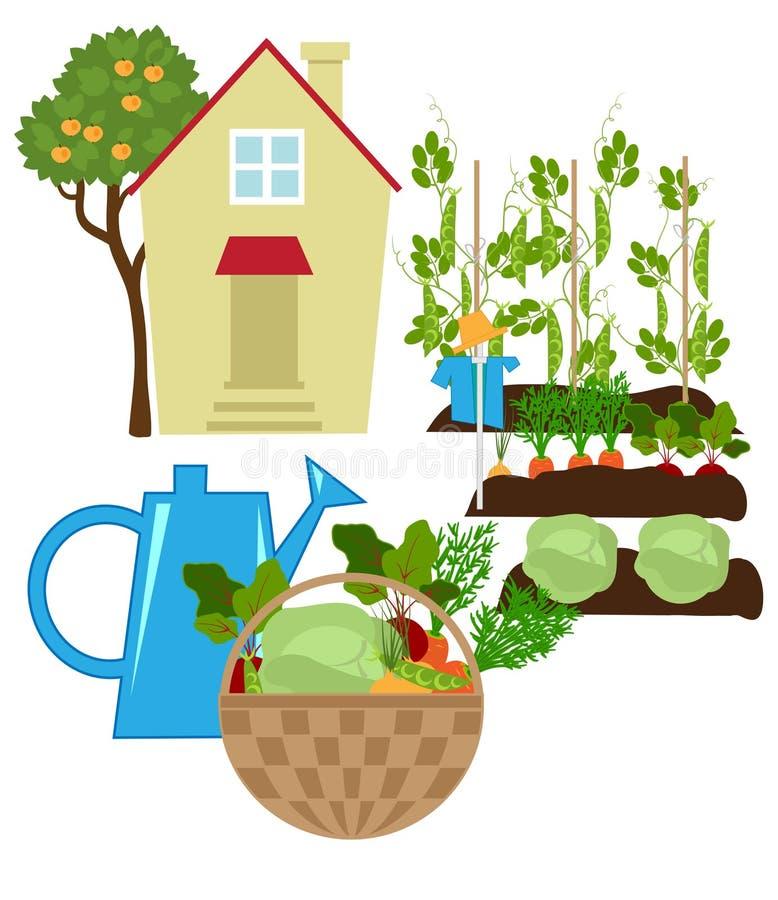 ogrodowy warzywo ilustracja wektor