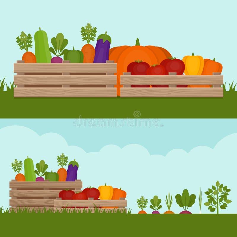 ogrodowy warzywo Organicznie i Zdrowy jedzenie Świezi warzywa wewnątrz ilustracja wektor