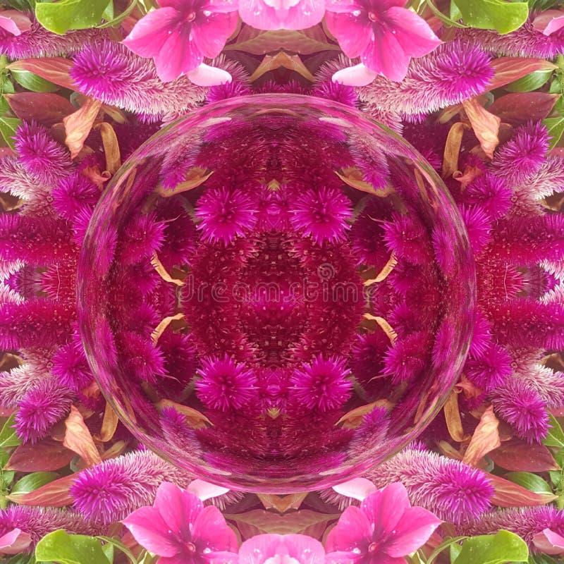Ogrodowych menchii kwiatu caleidoscope Piękny i zadziwiający formę ilustracji
