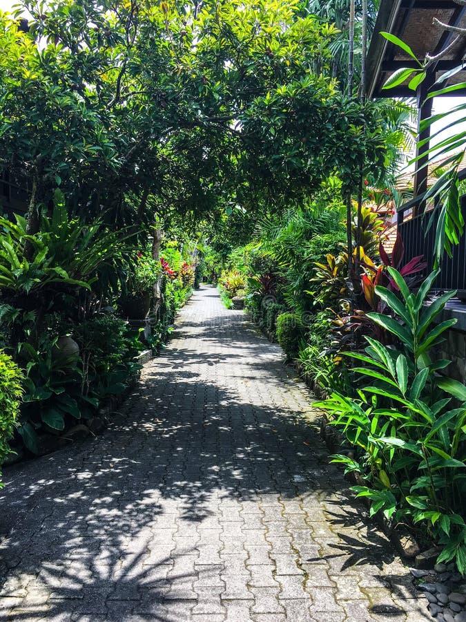ogrody tropikalnego zdjęcia royalty free