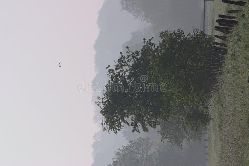 Download Ogrodzenie 1 drzewa zdjęcie stock. Obraz złożonej z floodplain - 143276