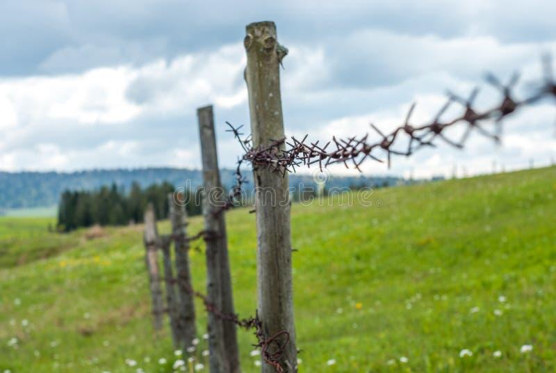 ogrodzenie barbed przewód Ogrodzenie w polu Łąkowa trawa z kwiatami zdjęcia stock