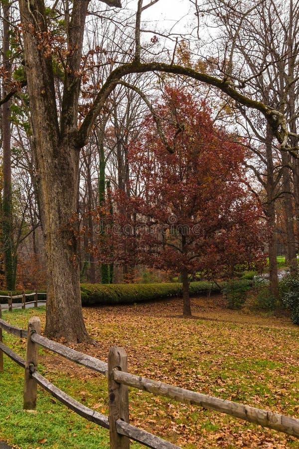 Ogrodzenie i drzewo w Lullwater parku, Atlanta, usa obraz royalty free