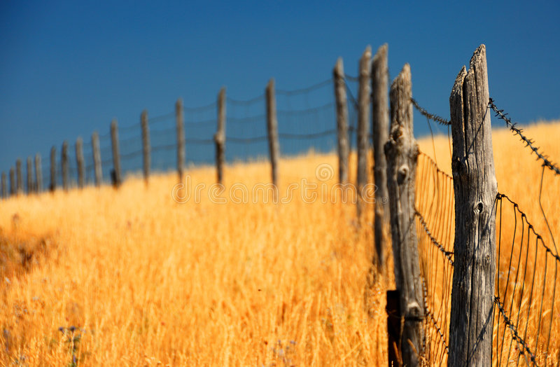 ogrodzenie pole kukurydzy obraz stock