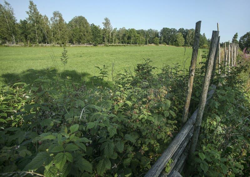 Ogrodzenie z polami i zielonym drzewem zdjęcie stock