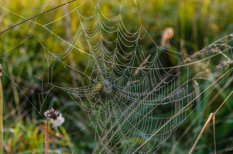 Ogromna pajęczyna z dziurami w centrum obraz royalty free