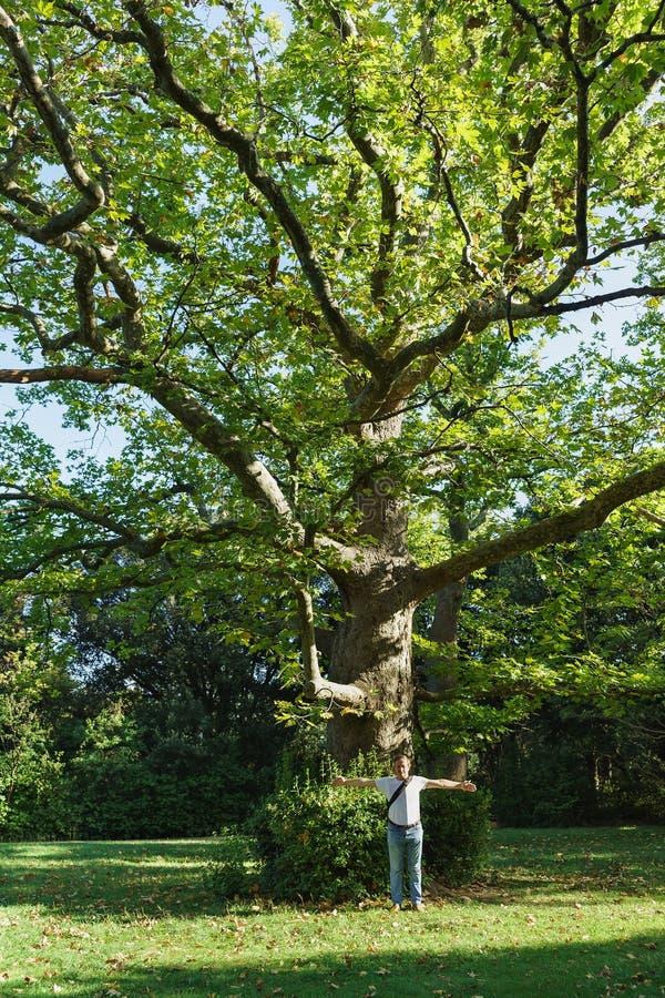 Ogromnego starego jaworu lub płaskich drzew lat Platanus od Parkowego Vorontsov pałac w Alupka obraz royalty free