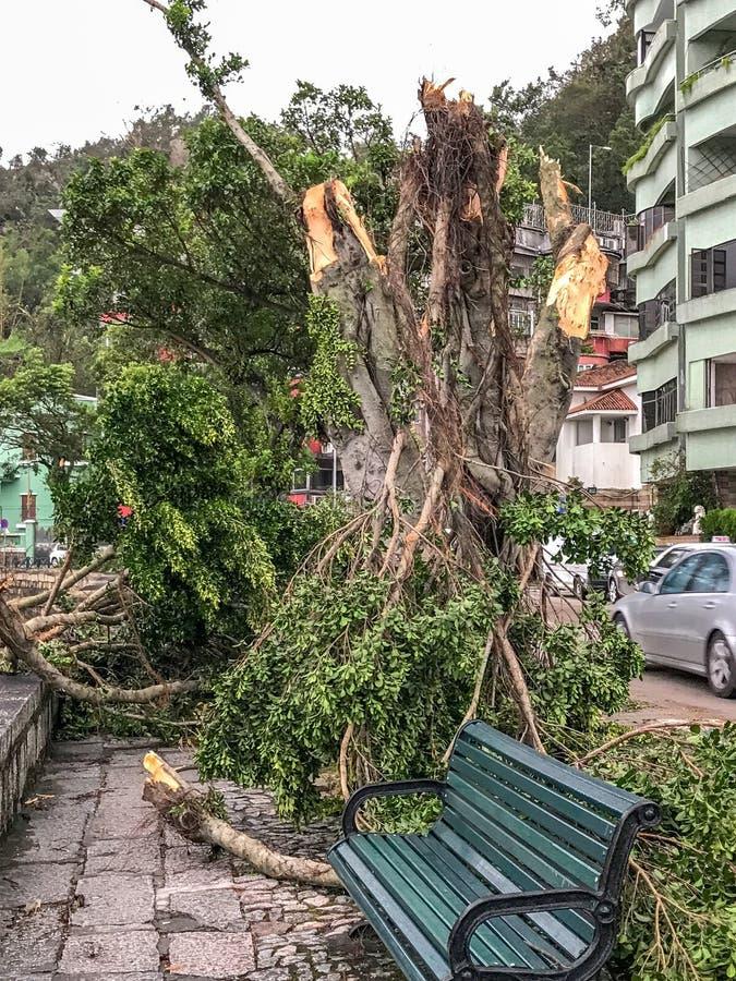 Ogromni drzewa wykorzeniający zdjęcie stock