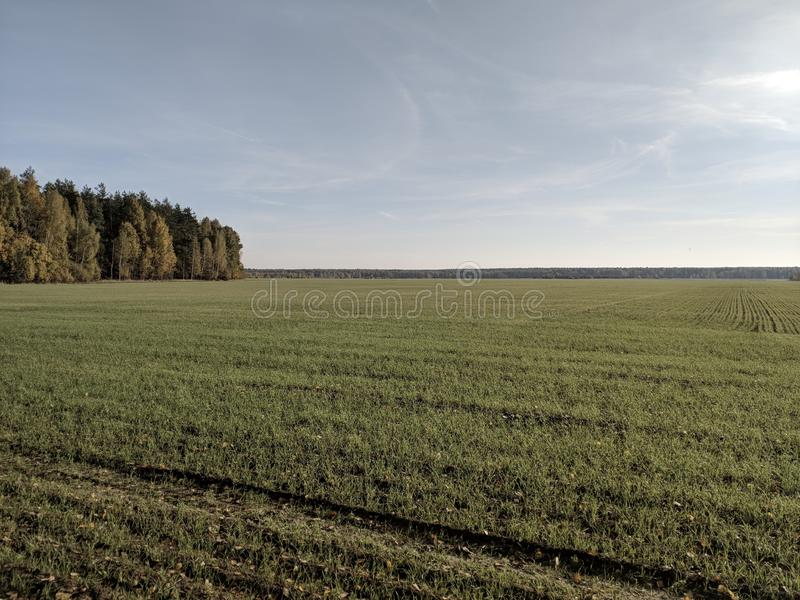 Ogromni pola i lasy obrazy royalty free