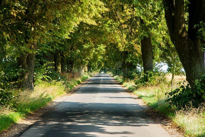 Ogromni starzy wapno na stronie wiejska droga na lato słonecznym dniu obrazy stock