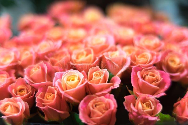 Ogromny bukiet róże właśnie no dostosowywał w ramie zdjęcie stock