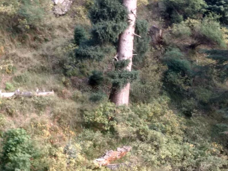 Ogromny drzewo w wzgórzu obraz royalty free