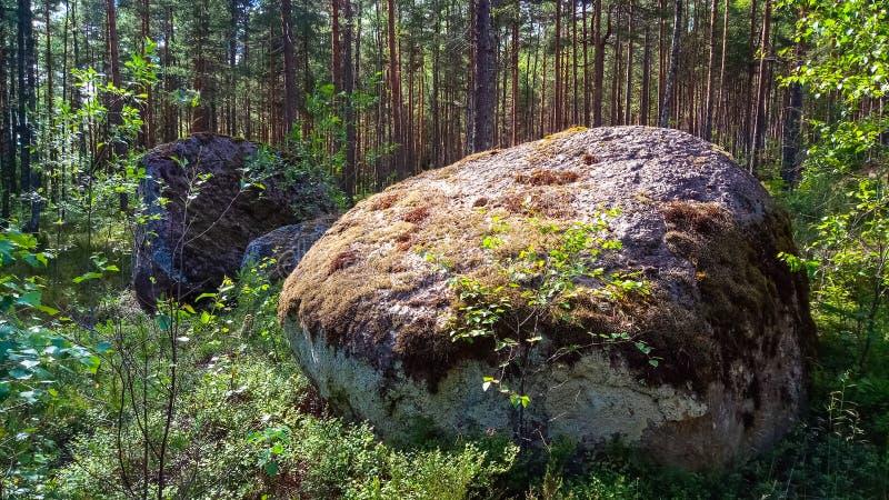 Ogromny granitowy głaz z głębokim lasem fotografia royalty free