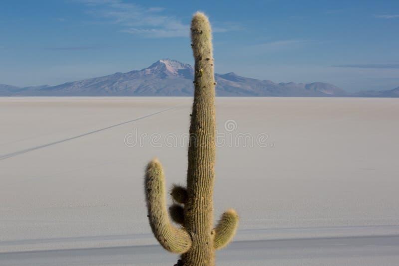Ogromny kaktus i Salar Uyuni z niebieskim niebem, Boliwia zdjęcia stock