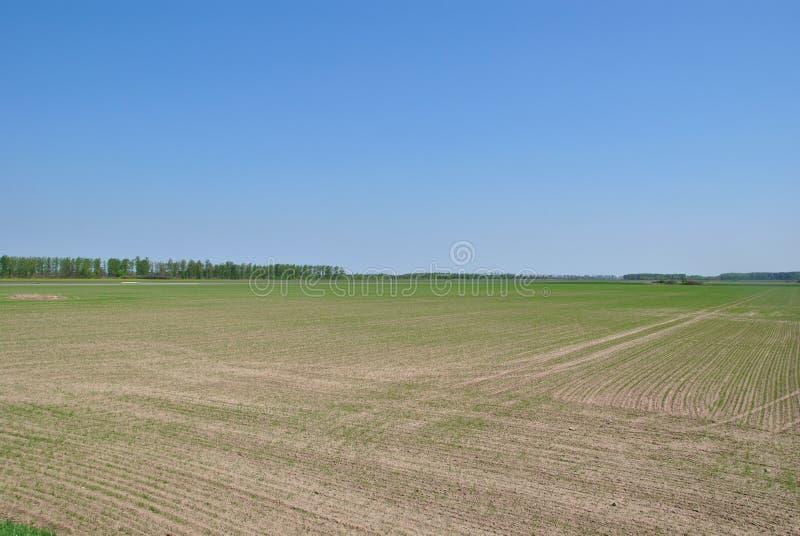 Ogromny pole na słonecznym dniu fotografia stock