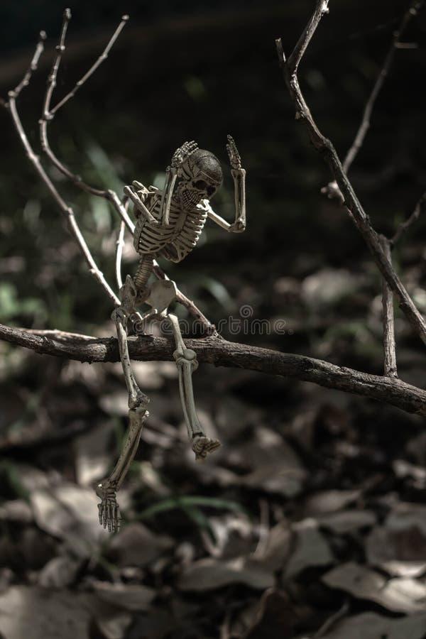 Oh mon squelette d'un dieu images libres de droits