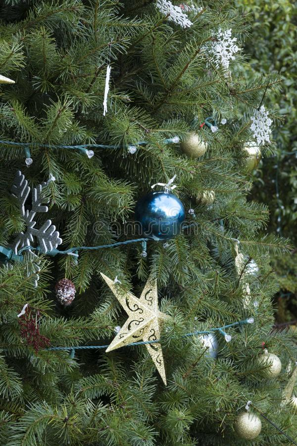 Oh, My Stars!. A gold star, gold balls, and white snowflake ornaments adorn a Christmas tree at Shore Acres State Park on the Oregon Coast royalty free stock photos