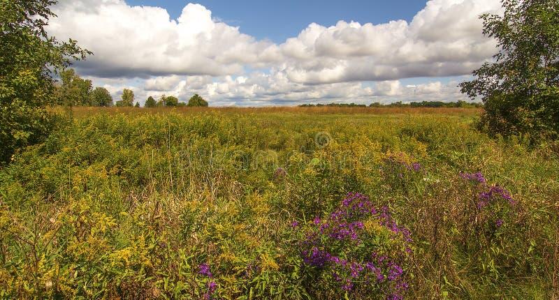 Ohio-Grasland stockfoto