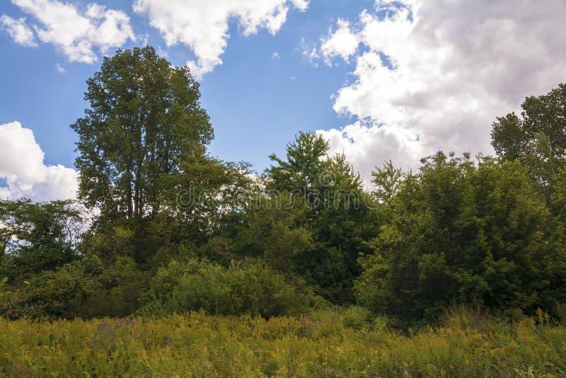 Ohio prärie arkivfoton