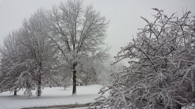 Ohio-Schnee fest zu den Bäumen nach dem Sturm stockbilder