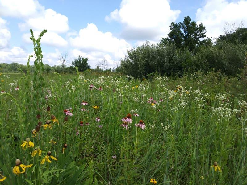 Ohio Wildflower Field stock images